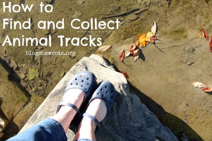 Ideas and directions for keeping adventurous students engaged with tracks and signs of animals in the wild. Learn where to find tracks and how to cast them!