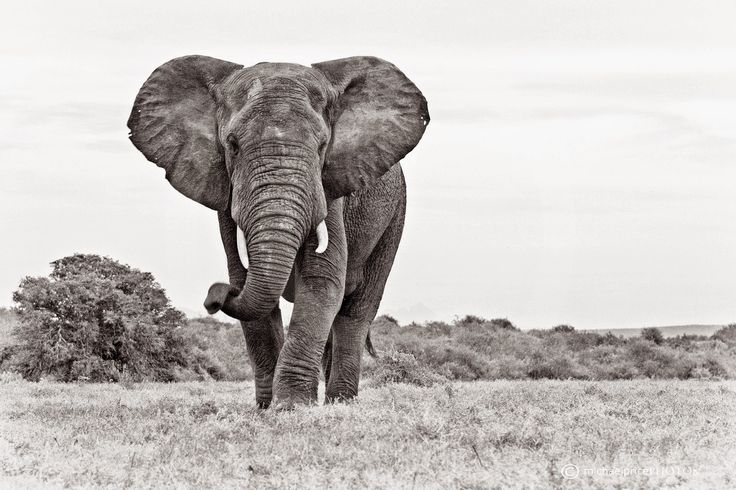 Five Star Lodge in the Addo Elephant National Park: World Elephant Day 12th August 2014