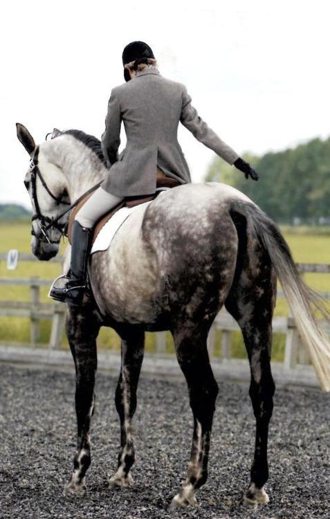 ∞That dappled grey though