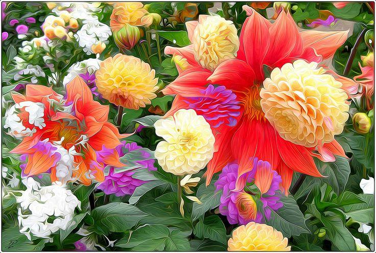 https://flic.kr/p/xr8QnK | todays flowers