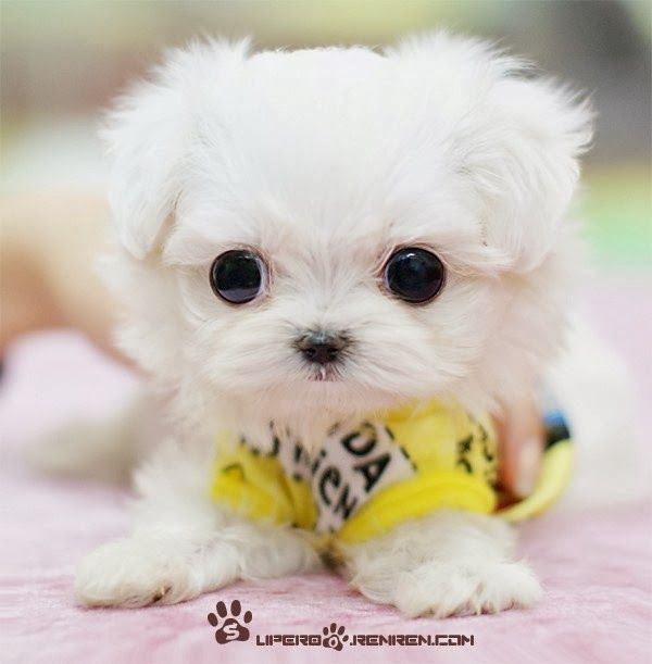 5 adorable puppies everyone will love to see, click on this pic to see them all