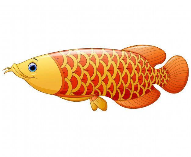 Arowana Fish Fish Vector Fish Fish Drawings