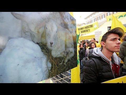 Cronaca: #Manifestazione a #Roma degli allevatori e agricoltori terremotati (link: http://ift.tt/2lZwMB3 )