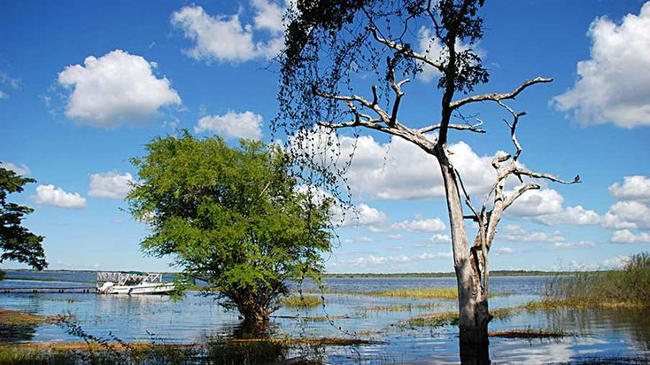 Belize Audubon Society   –  Crooked Tree Wildlife Sanctuary