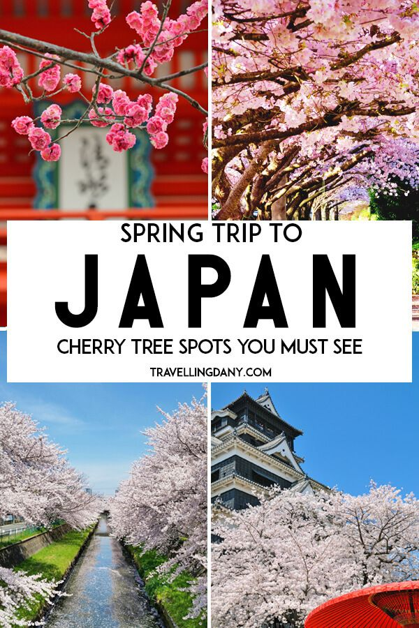 Awesome And Out Of The Ordinary Sakura Spots In Japan When To Go Japan Travel Destinations Travel Destinations Asia Asia Travel