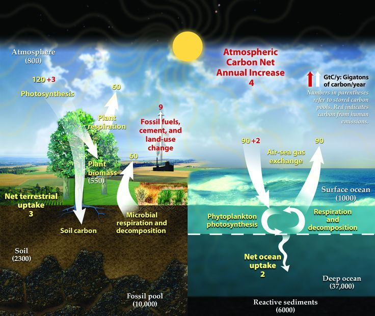 Best 15 Carbon Cycle images on Pinterest | Science and nature