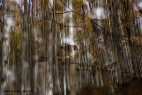 Manuelo Bececco e Emanuele Cantelli vi portano a scoprire i paesaggi fiabeschi del Parco Nazionele delle Foreste Casentinesi , dovre potremmo ammirare e fotografare la magia dell' autunno nell parco . Un corso completo dallo scatto alla post-produzione tra tecniche di composizione creative , ricercate. Alla creazione di vere e proprie foto artistiche .  Incontro a Badia Prataglia alle 05:00 del mattino (Facoltativo) sessione fotografica dalle 06:00 alle 10:00 (Facoltativo) Ritrovo in Hotel…