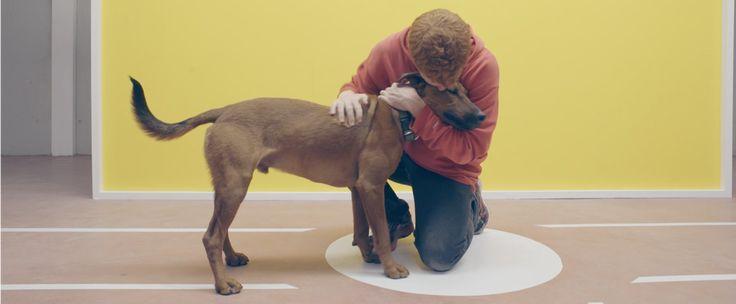 """Un divertido """"Test de la amistad"""" humano - perro"""
