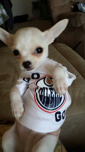 Fonzie the Oiler fan