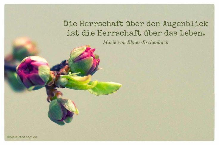 Mandelblüte mit dem Ebner-Eschenbach Zitat: Die Herrschaft über den Augenblick ist die Herrschaft über das Leben. Marie von Ebner-Eschenbach