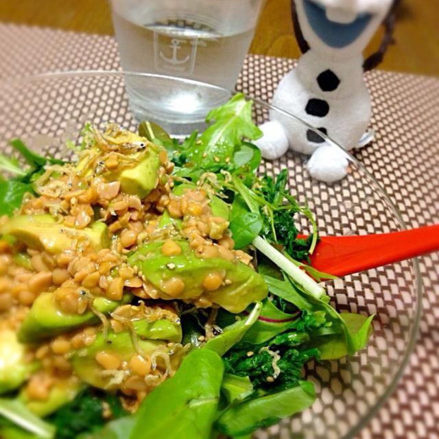 超ボリューミーだけど、ヘルシーな感じ♪( ´▽`) ジャコ、ゴマ、水菜、ベビーリーフ、春菊、アボカド、納豆〜味付けは、お塩、お酢、バルサミコ、胡椒、お醤油…などなど。簡単ヘルシー(笑) - 6件のもぐもぐ - アボカド納豆丼 by atsukotakaFlQ