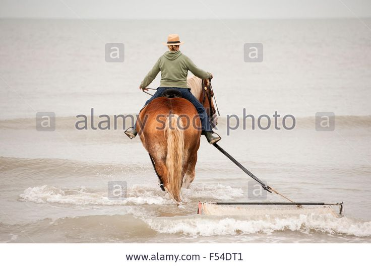 Demo Fishing With A Horse Along North Sea Coast, Nieuwvlietbad Stock Photo, Picture And Royalty Free Image. Pic. 89223793