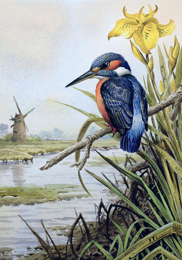 Bird Rushes River Martin Pecheur Windmill Flower