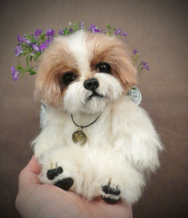 best shoo for shih tzu 289 best images about seriously shih tzu s just make 4149