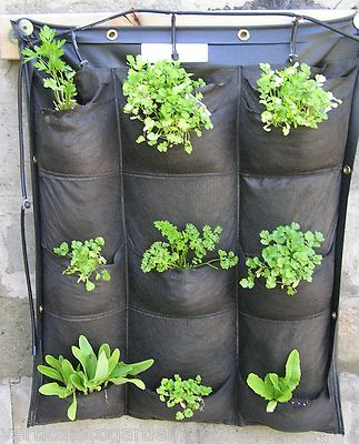 Hydroponic: Suitable Vertical Gardening Systems and Requirements