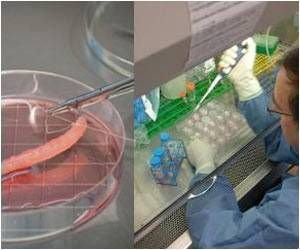 Researchers Take a Step Closer to Bio-Printing Transplantable Tissues and Organs