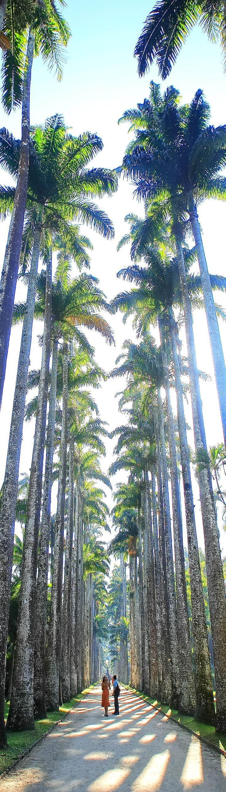 Conhecer o Jardim Botânico, Rio de Janeiro. E o país de uma maneira geral