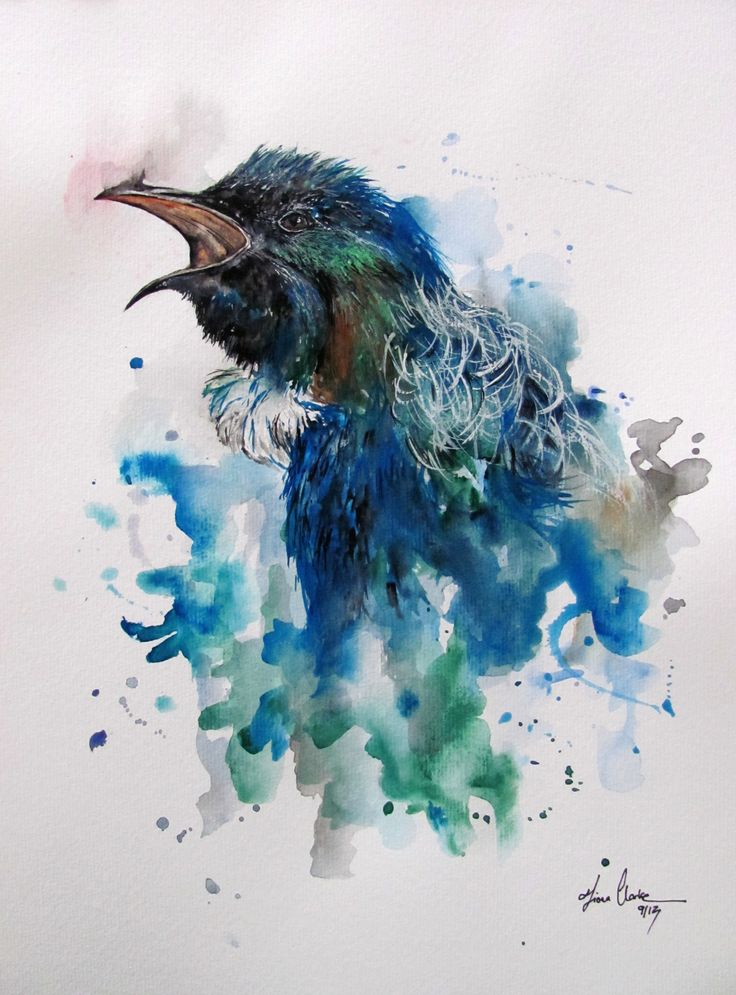 Tui Bird watercolor / watercolour / illustration www.fiona-clarke.com