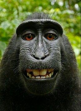 http://www.ziezozon.com/zonzin/selfie-aap-leidt-tot-rechtszaak