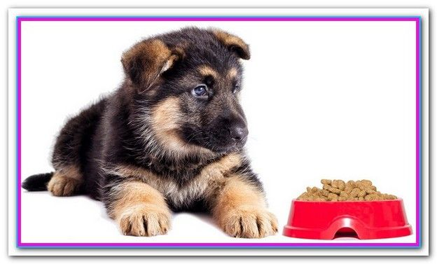 Best Dog Food For German Shepherd Puppy 2018 This Good Dog Food