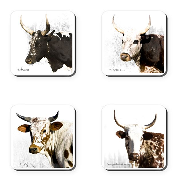Classic Nguni Coasters - Set 2    These coasters feature Ngunigalore's classic photographs of South Africa's indigenous nguni cattle.     Buy online at Ngunigalore.com - Delivery to anywhere in South Africa is FREE