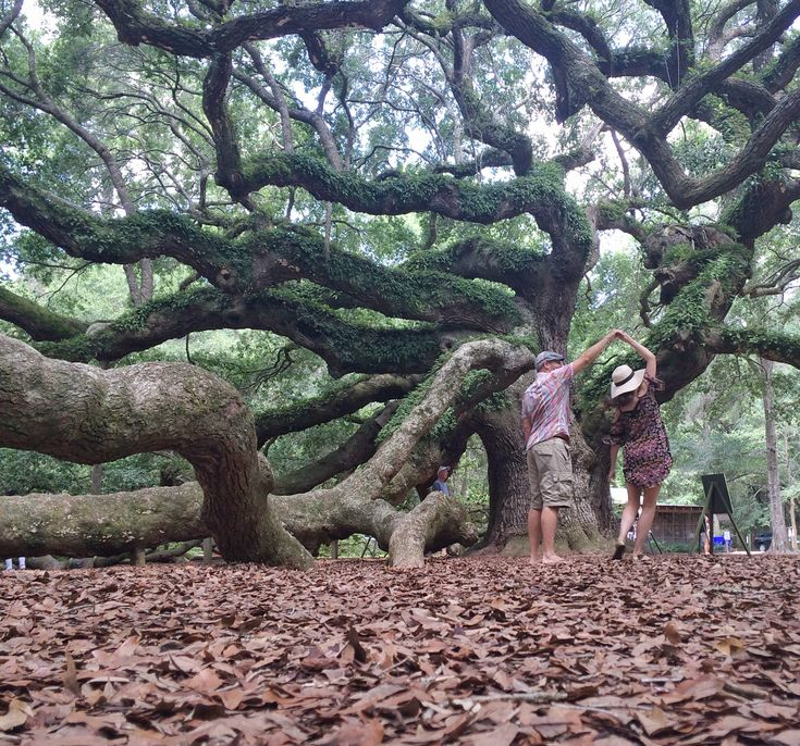 Angel Oak Tree is located just outside of Charleston in Johns Island, SC. This tree is estimated to be 400-500 years old, stands 66.5 feet tall, and measures 28 feet in circumference. Some even actually believe it to be 1500 years old! Either way, this tree should definitely be on your list of places to see if you ever find yourself visiting Charleston, it's simply amazing! #Charleston #SouthCarolina #AngelOak