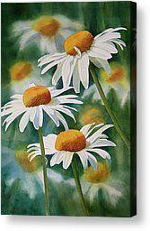Three Wild Daisies Canvas Print by Sharon Freeman