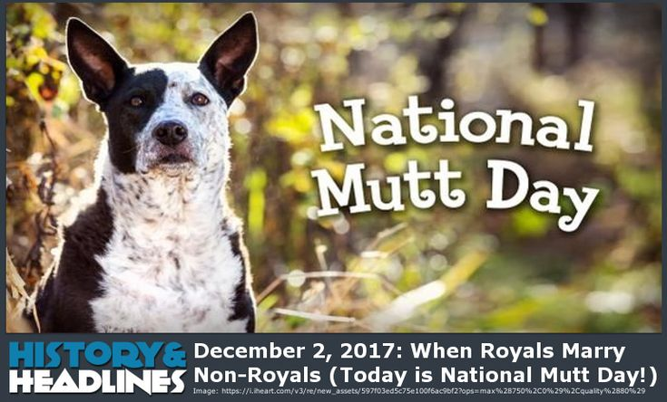 December 2, 2017: When Royals Marry Non-Royals (Today is National Mutt Day!) - https://www.historyandheadlines.com/december-2-2017-royals-marry-non-royals-today-national-mutt-day/