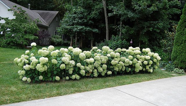 Farmhouse Landscaping Front Yard Shade