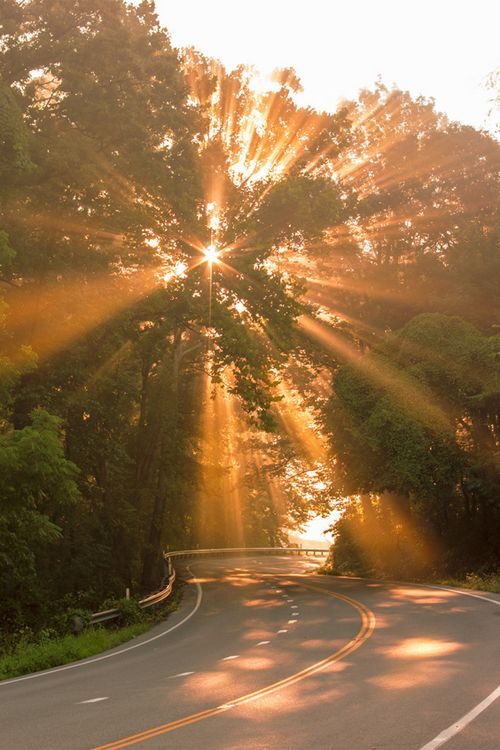 morning run would be nice in here...as the trees watching the sunrise in this beautiful curvy road...