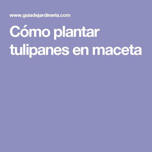 25+ trending plantar tulipanes ideas on pinterest   flores
