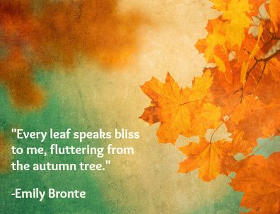 1000+ Quotes About Autumn on Pinterest  Fall quotes, Fall is here and Natura...