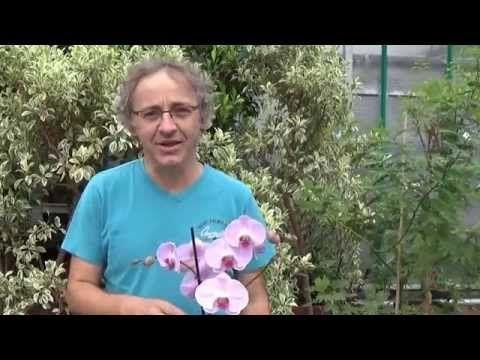 Comment tirer le meilleur de votre orchidée? - Femmes d'Aujourd'hui
