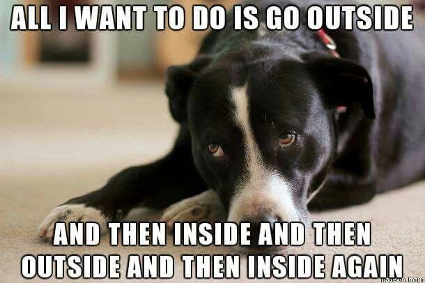 Life w/ puppies.