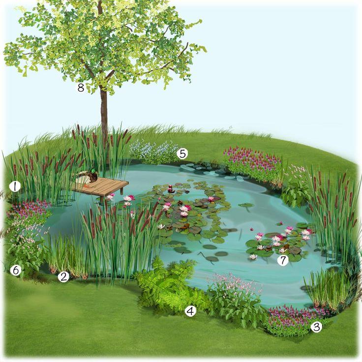 Projet am nagement jardin bassin naturel au jardin for Chlorine piscine