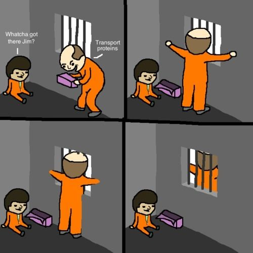Because it's a CELL WALL! (hahaha science jokes!)
