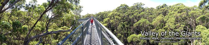 The architecturally designed pathway which takes you gradually into their giant forest canopy. At about forty metres, the view is breathtaking. It's not often you get to stand, canopy height, among these ancient giants.