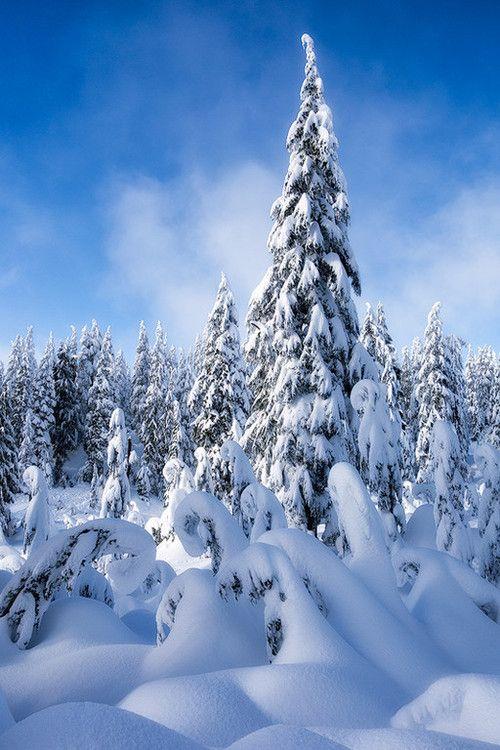 Mount Seymour Provincial Park, British Columbia, Canada