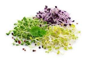 Tout savoir sur les graines germées : comment les consommer, les faire germer, les conserver…   Biodélices