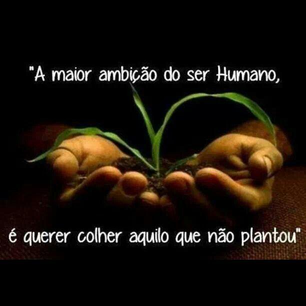 Preste atenção nas sementes que planta!