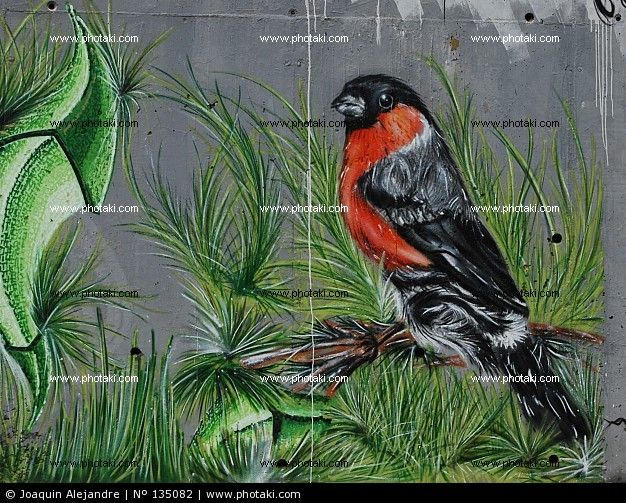 http://www.photaki.com/picture-street-art-graffiti-bird_135082.htm