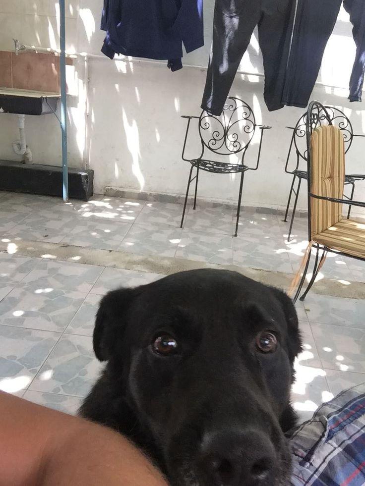 Im a good boy right yeah httpsifttt2sjnsgd cute