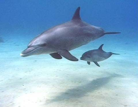 cute baby dolphins - Google Search