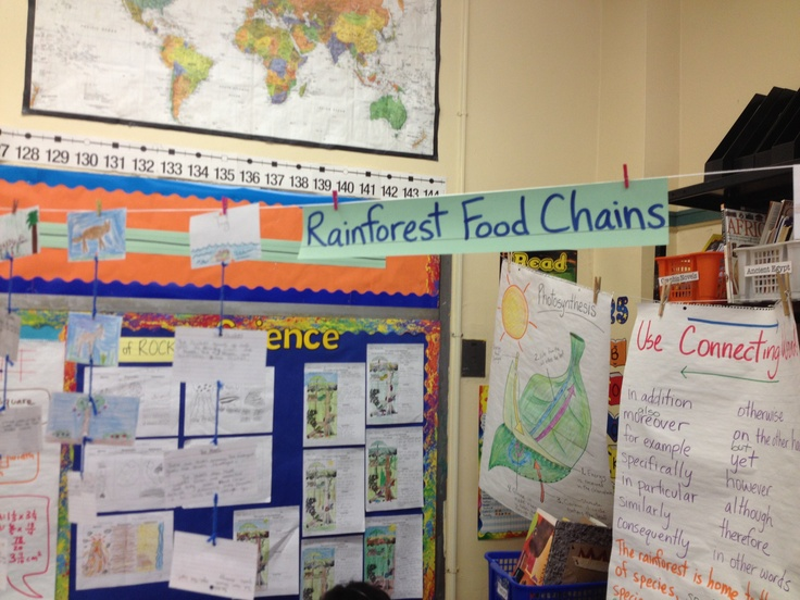 This is a project that the students from my 5th grade class did. It is called the Rainforest Food Chain, it was hung in order of the specie on the food chain with a picture of the creature on one side and a description on the other. This assignment involves NYS 6th Grade Science standard PERFORMANCE INDICATOR 6: Describe the flow of energy and matter through food chains and food webs