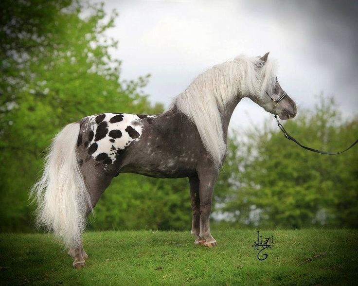 Cute little mini with a pretty spotted rump! Learn about #HorseHealth #HorseColic http://www.loveyour.horse                                                                                                                                                     More