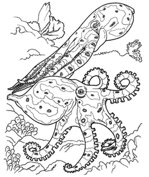 Coral Reef Fish, : Coral Reef Fish Predators Coloring ...