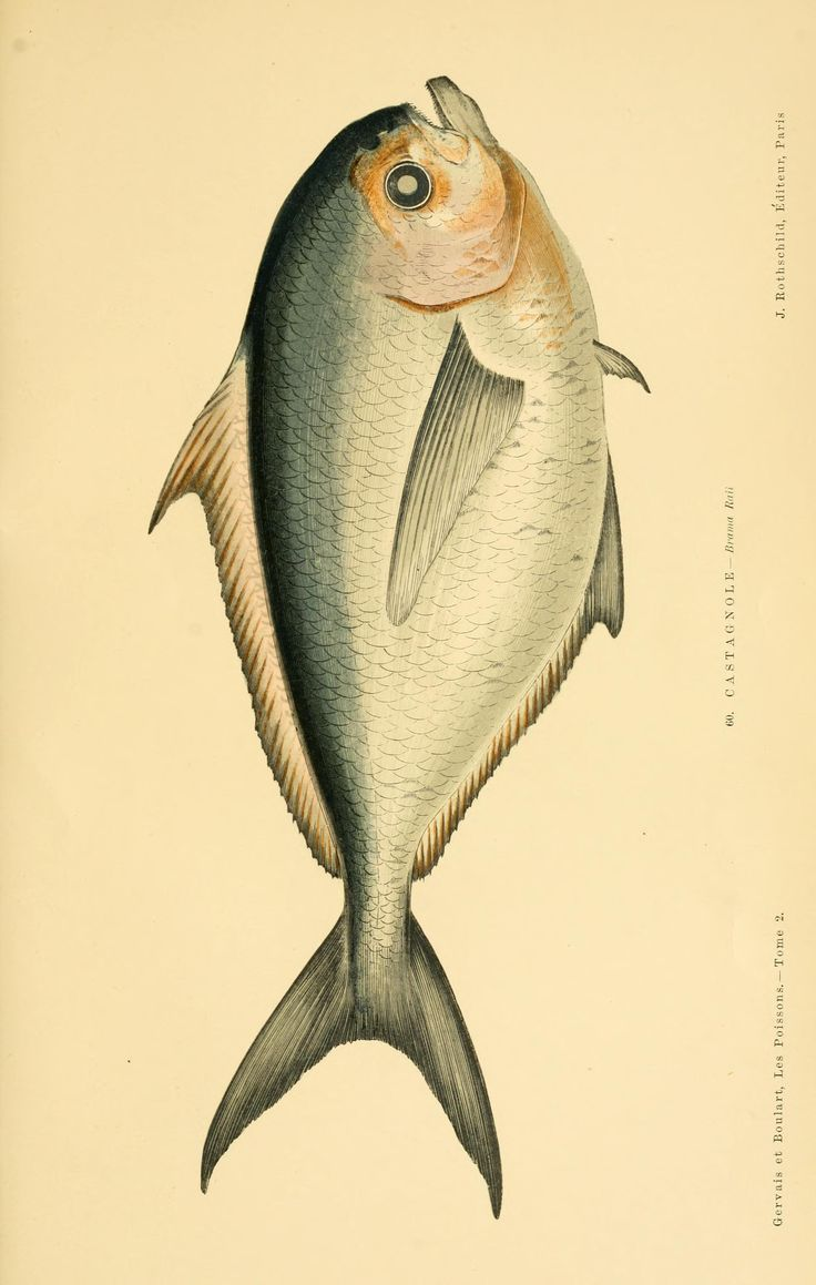 2 - Les poissons : - Biodiversity Heritage Library