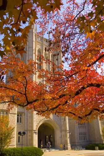 A walkable downtown and solid restaurant scene make the home of the University of Missouri a cool stop. Things to do in Columbia, Missouri include visiting the District and strolling among the historic buildings on the Mizzou's campus.