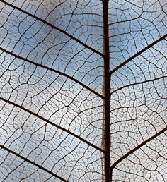 Image result for element of texture shape photography