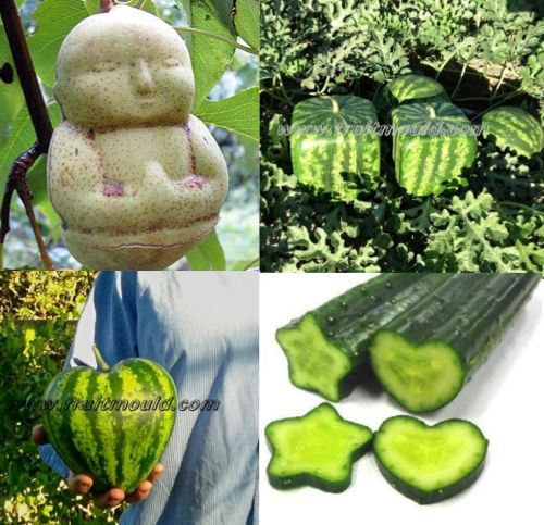 Square Watermelons And Apples Heart Or: Designer Fruit Molds...http://homestead-and-survival.com